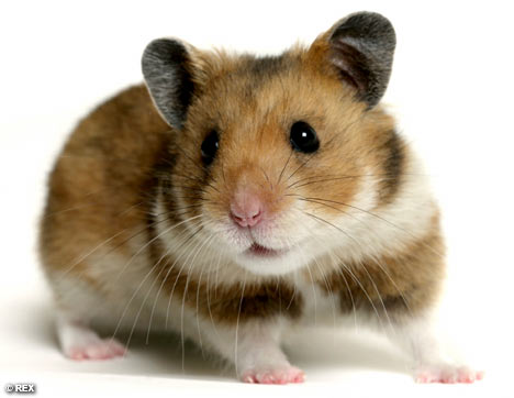 Pets Allowed: Hamsters, Guinea Pigs, Rabbits, Hermit Crabs, Fish, Birds,